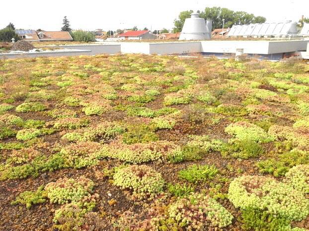 DRAINROOF erlaubt, Dachgärten mit Sedum zu bauen. Sie erfordern Wartung nur einmal pro Jahr, weil diese Pflanze  durch eine schnelle und homogene Wachstum und Beständigkeit gegen Wasserstress (Trockenheit, Frost, usw)  gekennzeichnet ist.