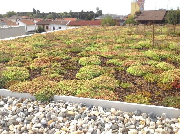 Extensive Dachgärten mit Sedum können auf Oberflächen mit reduzierter Stratigraphie installiert werden,  in stark urbanisierten Gebieten, in denen die Vegetation der Überbauung gleicht.